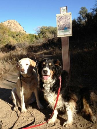 Boo and Sadie, dogs I was caring for while in Prescott