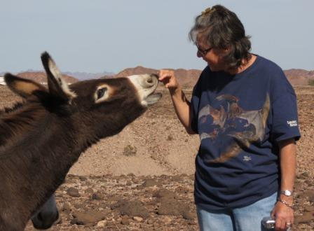 Candice engages a wild burro...not very wild, eh?
